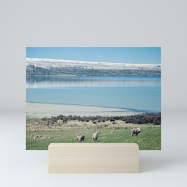 New Zealand Sheeps Mini Art Print