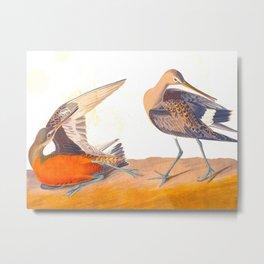 Hudsonian Godwit Bird Metal Print
