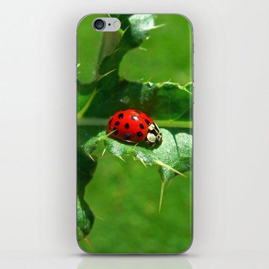 ladybug III iPhone & iPod Skin