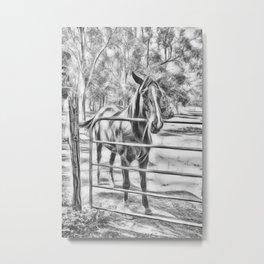 Calm horse standing near gate in Queensland Metal Print