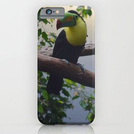 National Aviary - Pittsburgh - Keel Billed Toucan 2 iPhone Case
