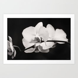 Orchid Classic Art Print