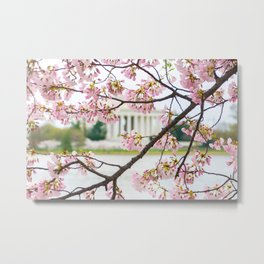 Jefferson through the Blossoms Metal Print
