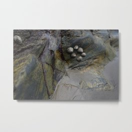 Collection of Limpets on Coastal Rocks Metal Print