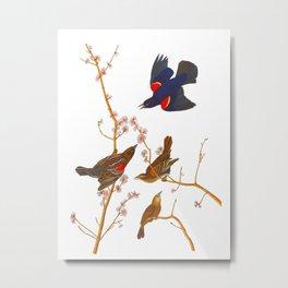 Red winged Starling, or Marsh Blackbird Metal Print