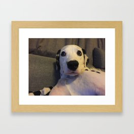 Skeptical Dalmatian Framed Art Print