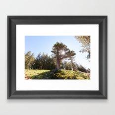 Lopsided Sierra Juniper Tree (Lake Tahoe, California) Framed Art Print