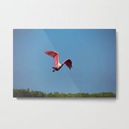 Roseate Spoonbill in Flight VI Metal Print