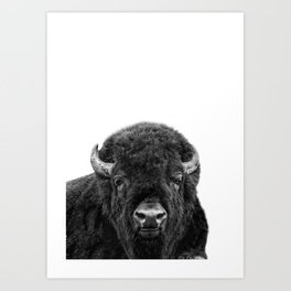 Bison, Buffalo Print Art Print