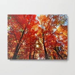 Sun in the Trees Metal Print