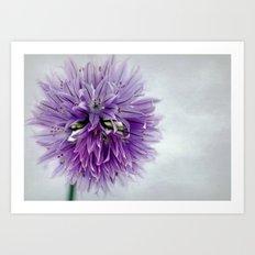 chives bloom Art Print
