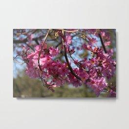 Spring  - Pink flowering Metal Print