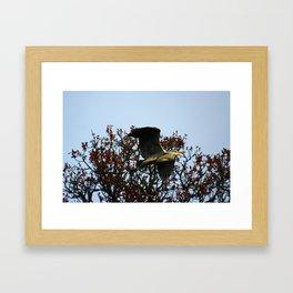 Heron Fly By Framed Art Print