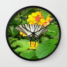 Scarce Swallowtail Feeding on Lantana Wall Clock