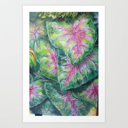Tropical (Caladium Detail) Art Print