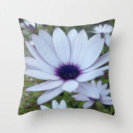 White Osteospermum Flower Daisy With Purple Hue Throw Pillow