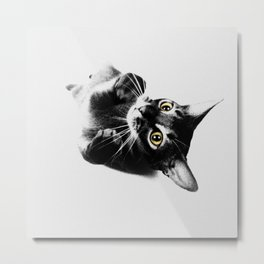 Cute Abyssinian cat  black and white Metal Print