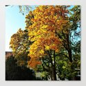 Wonderful Nature by mehrfarbeimleben