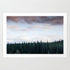 Alaska Trees in Denali National Park Art Print