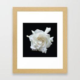 Gardenia on Black DPG150524 Framed Art Print