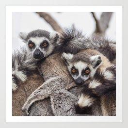 Lemur catta animals Art Print