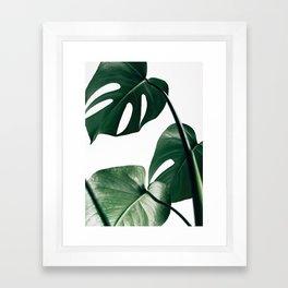 Monstera Leaf Print, Botanical Print, Botanical Art Framed Art Print
