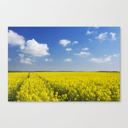 Path through blooming canola under a blue sky with clouds Canvas Print