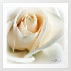 The Wedding Rose Art Print