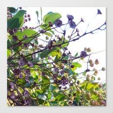 Ojai, California: Late Spring Canvas Print