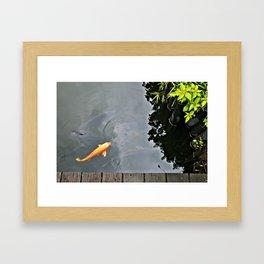 Koi Astound Framed Art Print