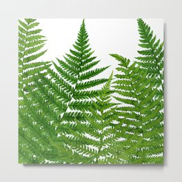 Summer Ferns Metal Print