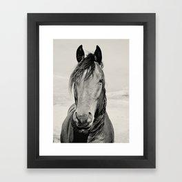Black and White Horse Portrait Framed Art Print