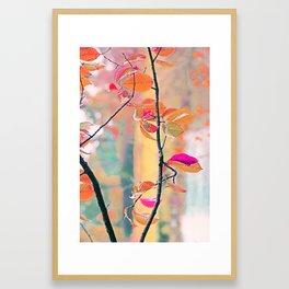 New Autumn Colours  Framed Art Print