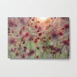 Grass with red flowers touched by the evening sun Metal Print