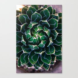 Queen Victoria's Agave Plant Canvas Print