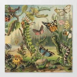 Cute Caterpillar Canvas Print