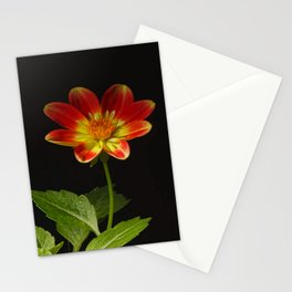 Soul Dance of the Dahlia Stationery Cards