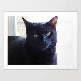 Cranky cat Art Print