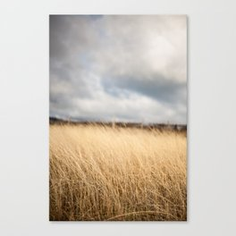 Winter in the vineyard Canvas Print