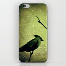 Waxwing iPhone & iPod Skin