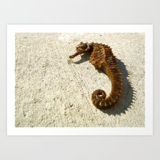 Seahorse Seahell Art Print