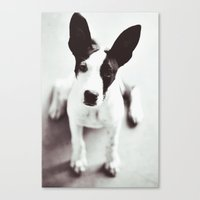 coco Canvas Prints featuring Coco by Beverly LeFevre