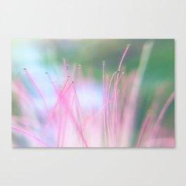 Silk Tree Canvas Print