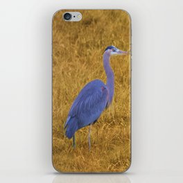 Great Blue Heron in the Grass iPhone Skin