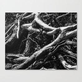 A Tahoe Tree Study Canvas Print