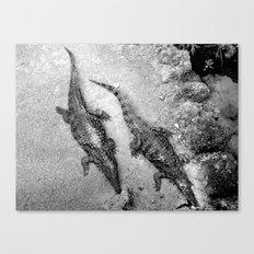 Aligators. Canvas Print