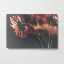 Gerbera daisies Metal Print