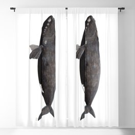 Northern right whale (Eubalaena glacialis) Blackout Curtain