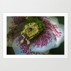 Harvington White Speckled Art Print