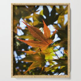 Japanese Maple Leaves Serving Tray